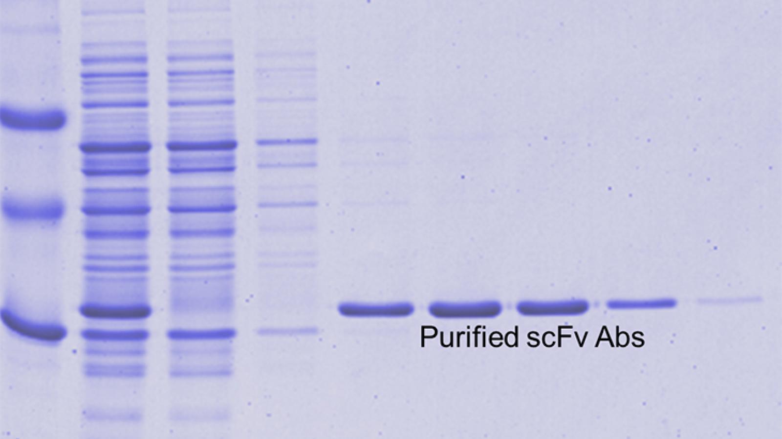 Singh Lab Research Slide