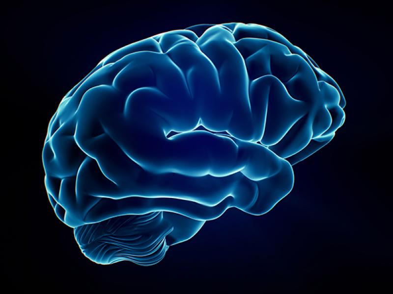 3D brain illustrtion